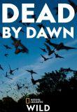 Watch Movie dead-by-dawn-season-1