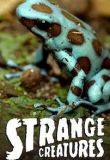 Watch Movie strange-creatures-season-2