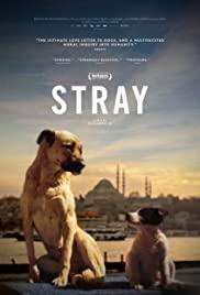 Watch Movie stray-2020