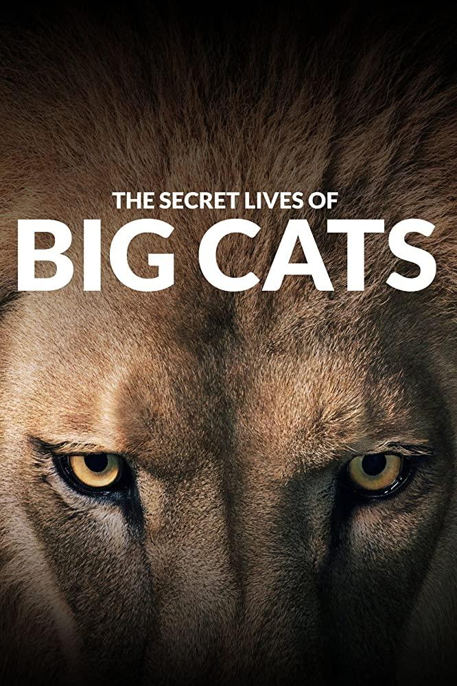 Watch Movie the-secret-lives-of-big-cats-season-1